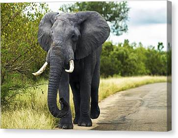 Tusker With Attitude Canvas Print by Peter Turner