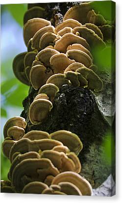 Twist Of Shrooms Canvas Print by Christina Rollo