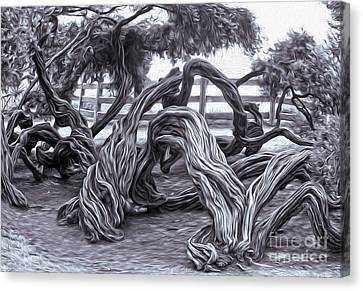 Twisted Tree - 01 Canvas Print by Gregory Dyer