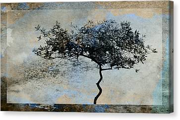 Twisted Tree Canvas Print by David Ridley