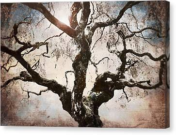 Twisted Tree I Canvas Print by April Moen