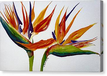Two Birds Of Paradise Canvas Print by Susan Duda