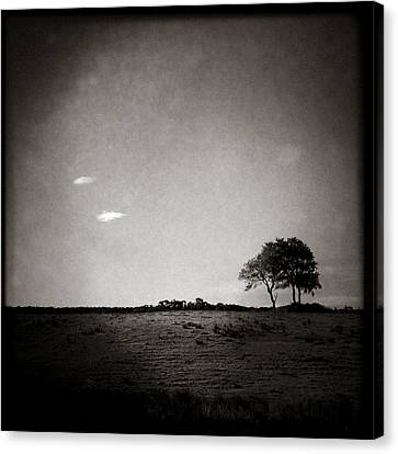 Two Clouds And A Tree Canvas Print by Dave Bowman