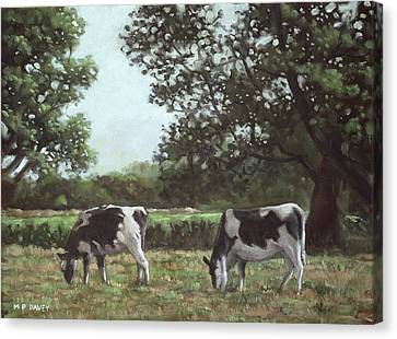 Two Cows In Field At Throop Dorset Uk Canvas Print by Martin Davey
