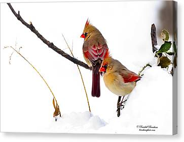 Two Females Posing As Cardinals Canvas Print by Randall Branham