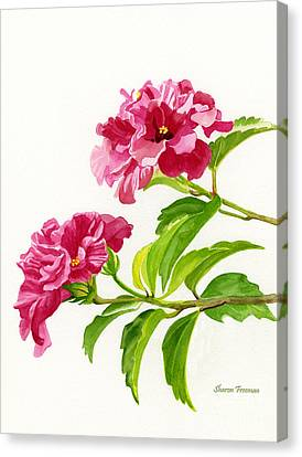 Two Hibiscus Rosa Sinensis Blossoms Canvas Print by Sharon Freeman