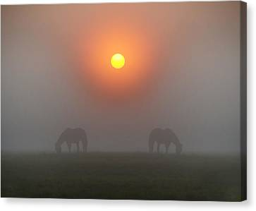 Two Horses In The Foggy Sun Canvas Print by Bill Cannon
