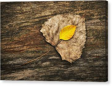 Two Leaves  Canvas Print by Scott Norris