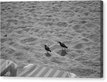 Two Little Birds On The Beach  Canvas Print by Shaun Maclellan