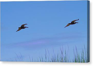 Two Pelicans In Flight 2 Canvas Print by Cathy Lindsey
