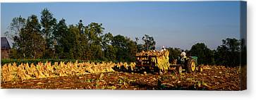 Two People Harvesting Tobacco Canvas Print by Panoramic Images