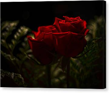 Two Roses For Our Anniversary Canvas Print by Ronda Broatch