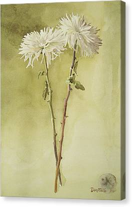 Two White Mums Canvas Print by Kathryn Donatelli