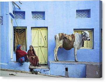 Two Women And A Cow Sitting Outside Of Canvas Print by Alan Williams