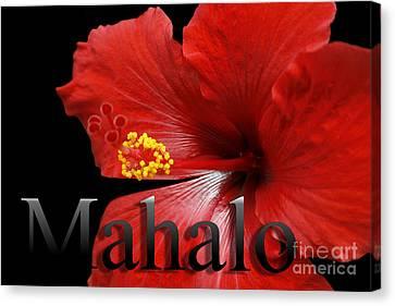 Ula Anoano Hanohano Red Tropical Hibiscus Mahalo Canvas Print by Sharon Mau