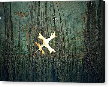 Under The Current Canvas Print by Lisa Plymell