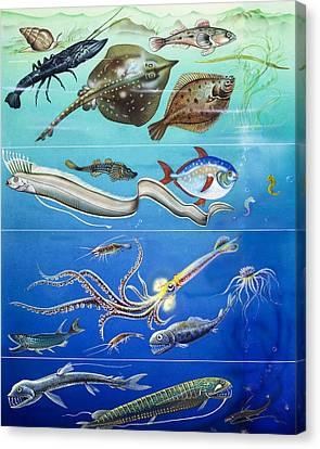 Underwater Creatures Montage Canvas Print by English School
