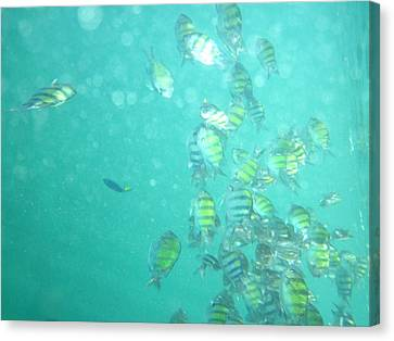 Underwater - Long Boat Tour - Phi Phi Island - 01137 Canvas Print by DC Photographer