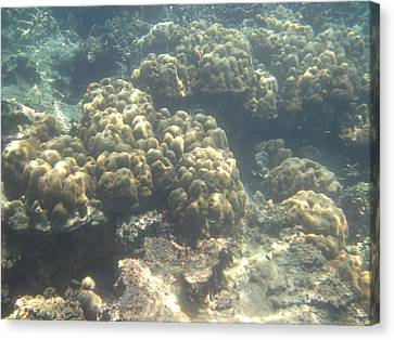 Underwater - Long Boat Tour - Phi Phi Island - 011379 Canvas Print by DC Photographer