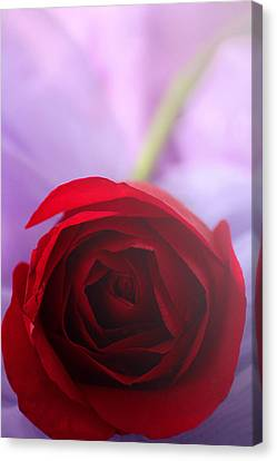Undying Love Canvas Print by  The Art Of Marilyn Ridoutt-Greene