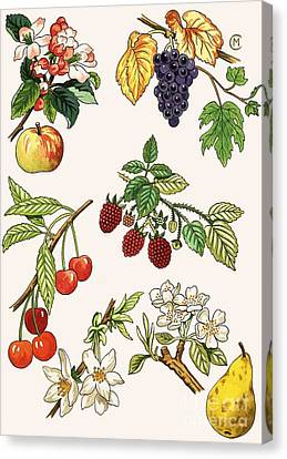 Unidentified Montage Of Fruit Canvas Print by English School