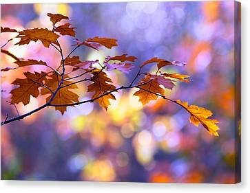 United Colours Of Autumn II Canvas Print by Roeselien Raimond