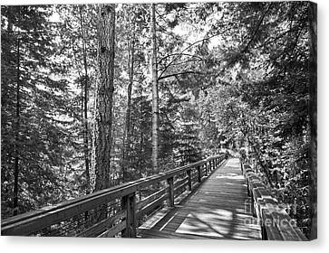 University Of California Santa Cruz Walkway Canvas Print by University Icons