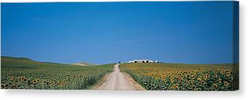 Unpaved Road Andalucia Spain Canvas Print by Panoramic Images