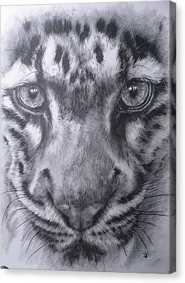 Up Close Clouded Leopard Canvas Print by Barbara Keith
