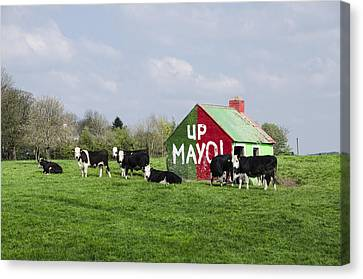 Up Mayo Canvas Print by Bill Cannon