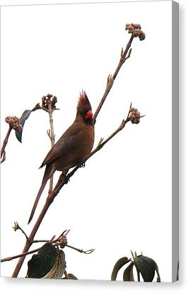 Up On The Treetops  Canvas Print by Arielle Cunnea