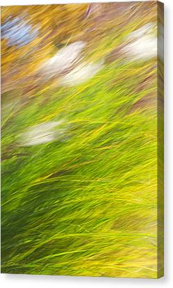 Urban Nature Fall Grass Abstract Canvas Print by Christina Rollo