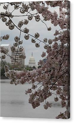 Us Capitol - Cherry Blossoms - Washington Dc - 01133 Canvas Print by DC Photographer