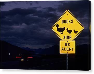 Usa, Alaska, Duck Crossing Sign Canvas Print by Gerry Reynolds