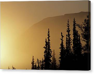 Usa, Alaska, Fog, Sunrise, Winter Canvas Print by Gerry Reynolds
