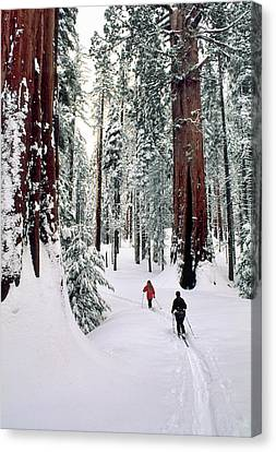 Usa, California, Cross Country Skiing Canvas Print by Gerry Reynolds