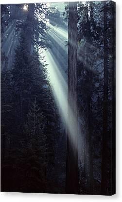 Usa, California, Sun, Smoke, Forest Canvas Print by Gerry Reynolds