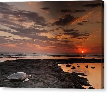 Usa, Hawaii, Honokohau Bay Canvas Print by Jaynes Gallery