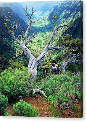 Usa, Oregon, View Of Steens Mountain Canvas Print by Scott T. Smith