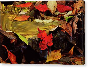 Usa, Pennsylvania, Pocono Mountains Canvas Print by Jaynes Gallery