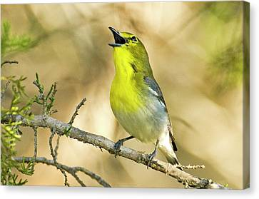 Usa, Texas, Balcones Canyon Nwr Canvas Print by Jaynes Gallery