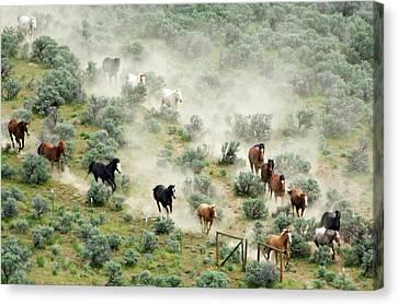 Usa, Washington, Malaga, Running Horses Canvas Print by Jaynes Gallery