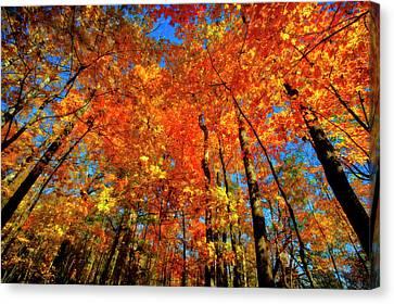Usa, West Lafayette, Indiana, Trees Canvas Print by Rona Schwarz