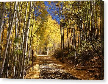 Vail Colorado Fall Bike Path Canvas Print by Michael J Bauer