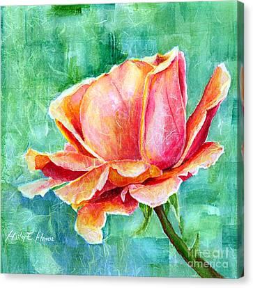 Valentine Rose Canvas Print by Hailey E Herrera