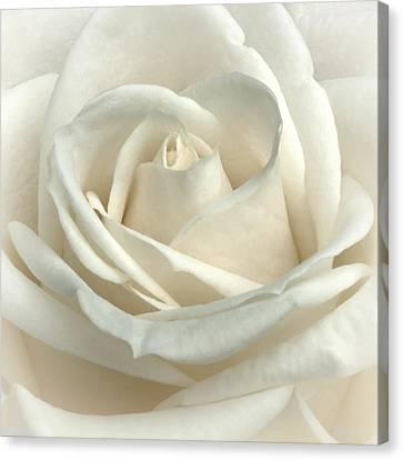 Vanilla Frosting Canvas Print by Darlene Kwiatkowski