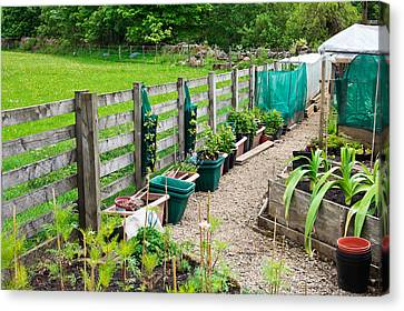 Vegetable Garden Canvas Print by Tom Gowanlock
