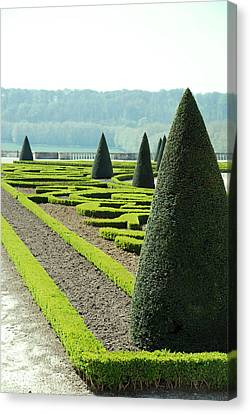 Versailles Topiary Garden Canvas Print by Jennifer Ancker