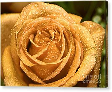 Very Wet Rose Canvas Print by Debbie Portwood