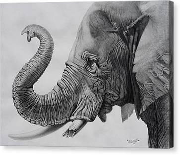 Veteran Canvas Print by Tim Dangaran
